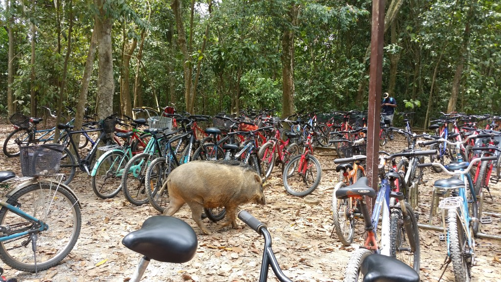 Huge bycicle parking space and a wild boar!