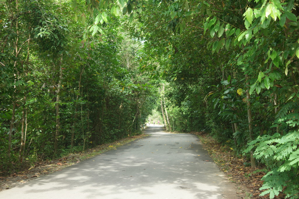 Road trail
