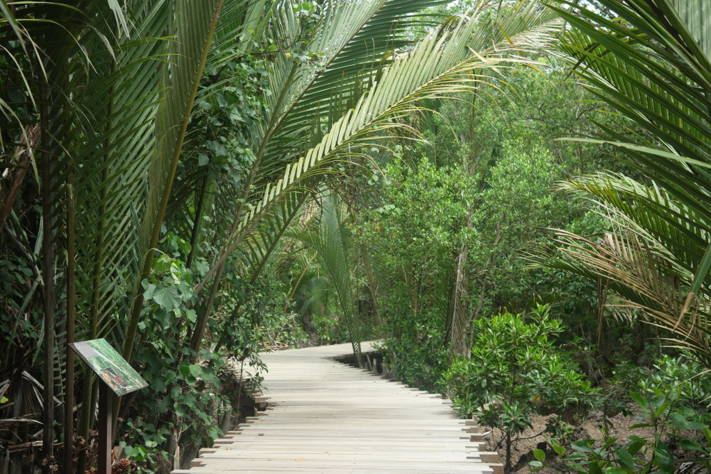 The Mangrove Walk