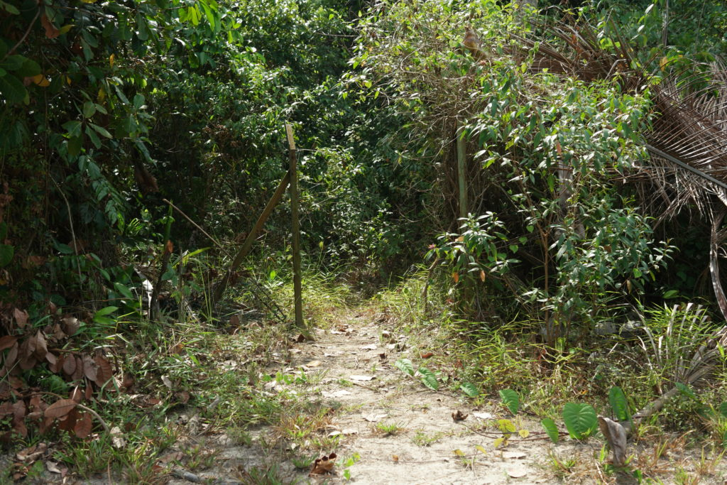 Jungle trekking entrance at the back of the resort