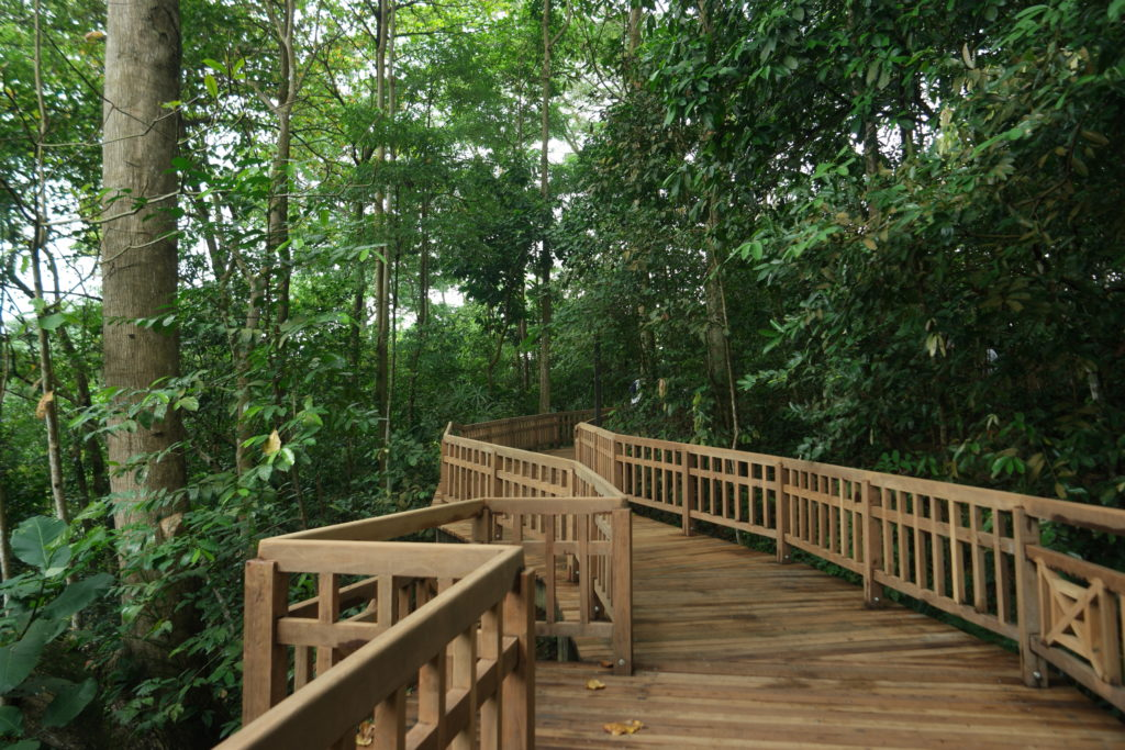 From the Visitor Centre of Bukit Timah Nature Reserve entrance, head on to this wooden platform to access the Hindhede Quarry