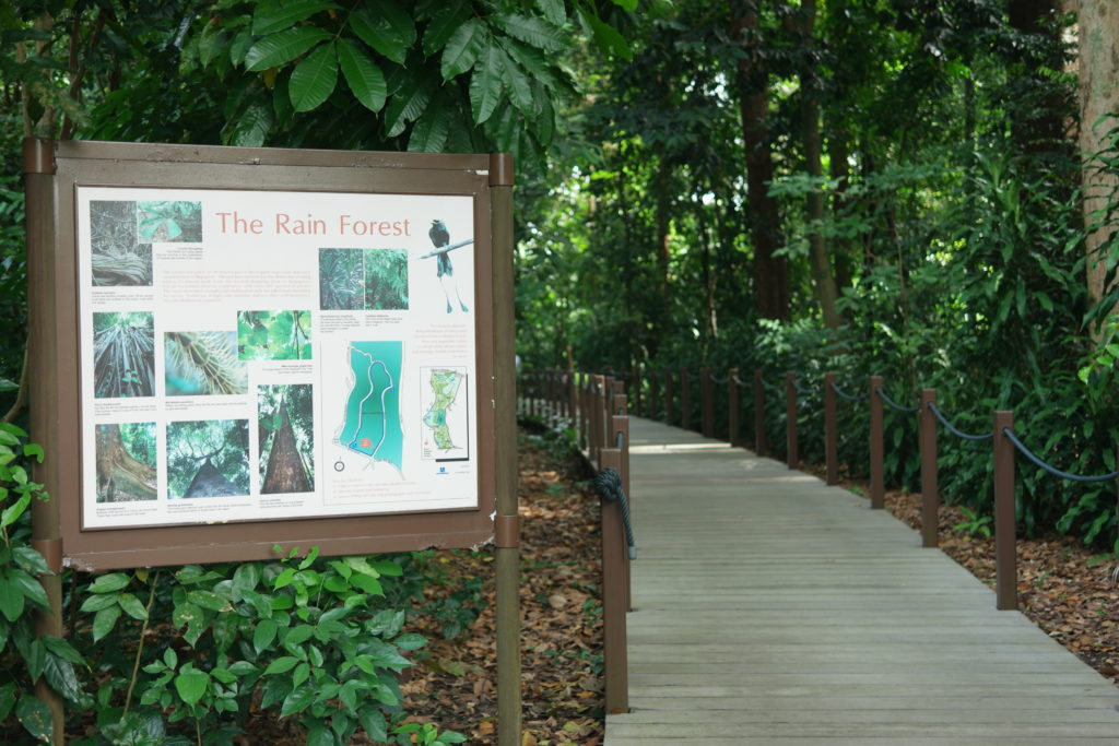 Entrance to the Rainforest